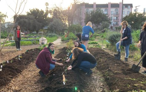 Garden Club: Planting Seeds of Hope