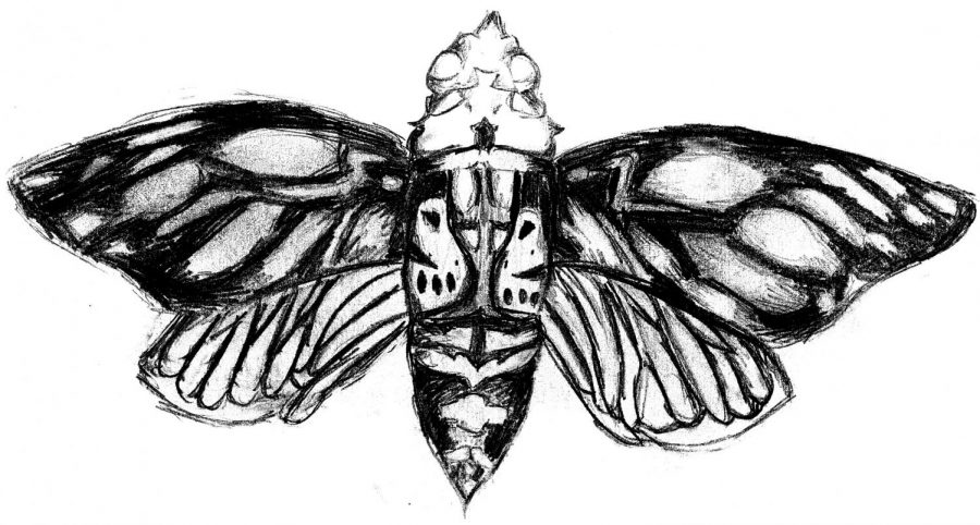 Butterfly conspiracy puzzel